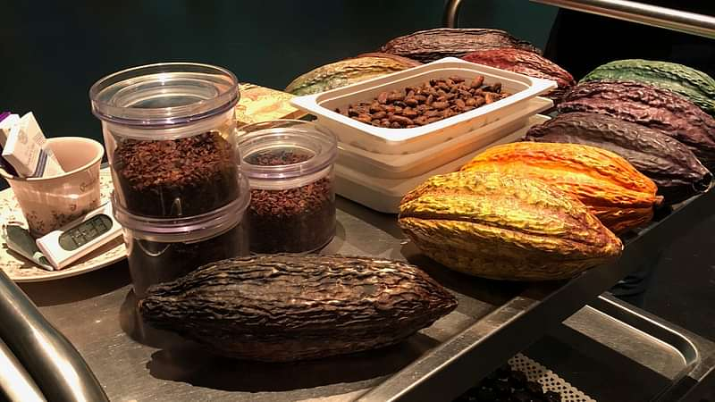 Cocoa pods, beans and nibs are displayed on a table