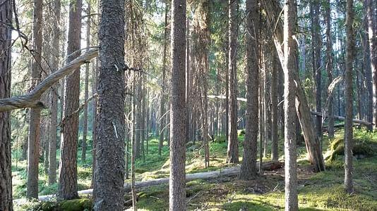 Nature safari Finland Oy Kohtaa villi luonto Pyhä-Häkin kansallispuistossa Jyväskylä