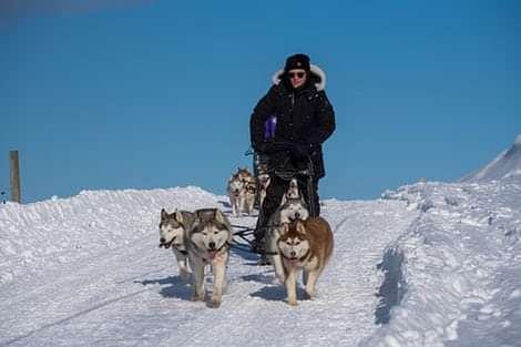 Dog Sledding in Iceland on Snow, Hundeschlitten Touren auf Schnee