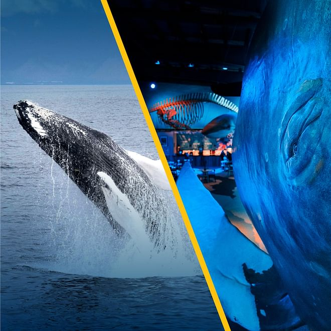 Whale Watching & Whales of Iceland Exhibition - From Reykjavík