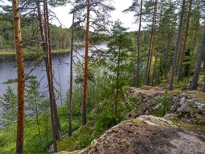 Nature safari Finland Oy Kohtaa villi luonto Isojärven kansallispuistossa Jyväskylä